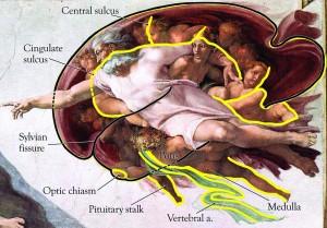 Michelangelo Sistine Chapel Adam Brain  300x209 The Sistine Chapel Ceiling: The Secret in Plain Sight