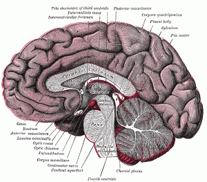 pineal and pituitary