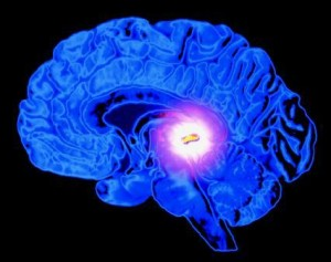 pineal gland 2 300x237 The True Meaning of the Ark of the Covenant