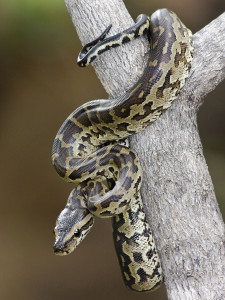 serpent on a tree